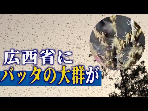 2020/07/06 バッタの大群襲来=広西チワン族自治州桂林市の農業大県に