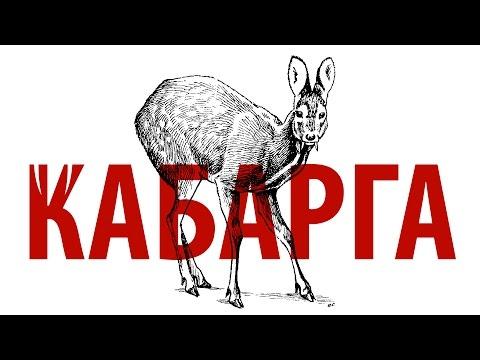 КАБАРГА | редкие и исчезающие виды животных России