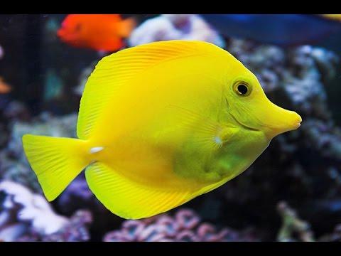 Aquarium at the Silverton Hotel n Casino Las Vegas