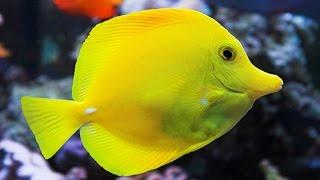 Aquarium at the Silverton