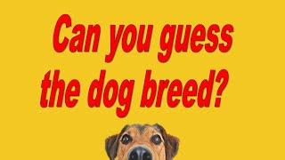 Guess the dog breed quiz - questions with answers
