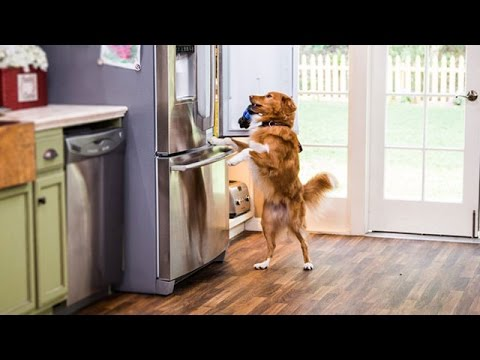 Home & Family - How to Teach your Dog to open the Fridge