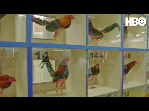 Cockfighting in America | Full Segment | Real Sports w/ Bryant Gumbel | HBO