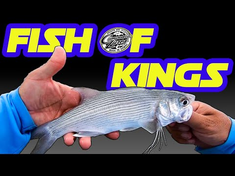 Rare Fish In Hawaii | Moi Fishing | Whipping Fishing | Fishing In Hawaii | Hawaii Fishing | Honolulu