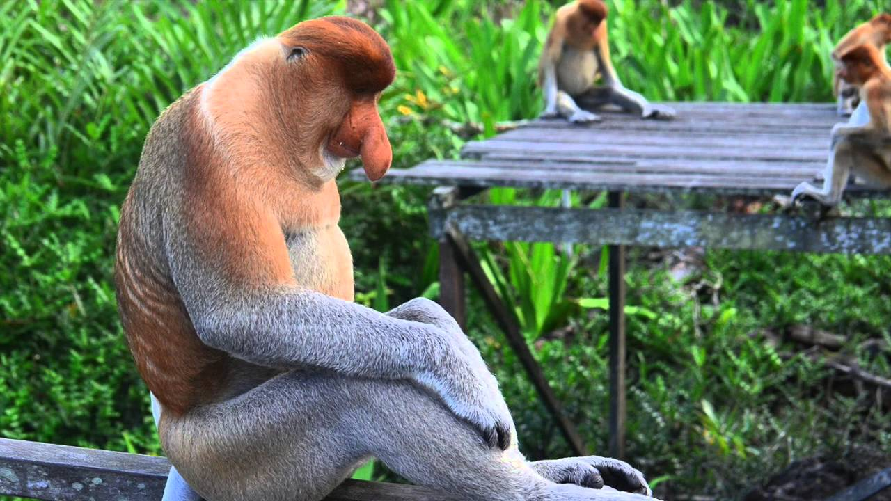 Image Result For Differences Between Old World And New World Monkeys