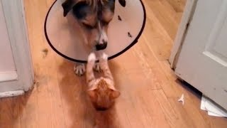 Most UNIQUE and UNEXPECTED CAT & DOG moments! So FUNNY you'll DIE LAUGHING!