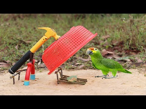 Best Bird Trap Technology | How to Make Bird Trap from Hammer Plier and ...