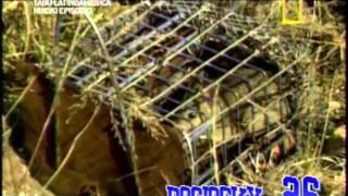 caldo de rata de campo grabado en fresnillo zacatecas Tabú nat geo sin fines de lucro