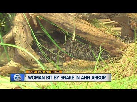 Woman bit by snake