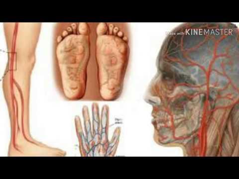 Acupressure सभी बिमारियों का करता है सर्वनास | मानव के लिए अमृत | Safe life  with Acupressure