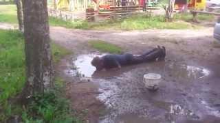 Мужик напился настолько, что пьет из лужи !. Типич...
