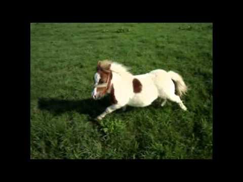 miroslav škoro konji bili konji vrani