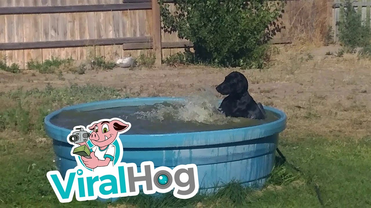Funny Video: Just a Black Lab Enjoying His Pool