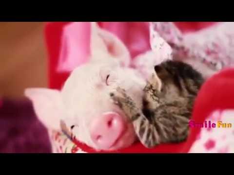 Смешные Коты ДО СЛЕЗ Приколы с Котами Кошками 2018 смотреть онлайн видео в хорош