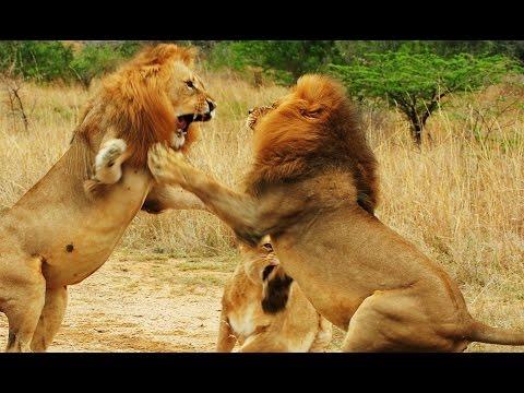 Lion Gangland - 720p NGW