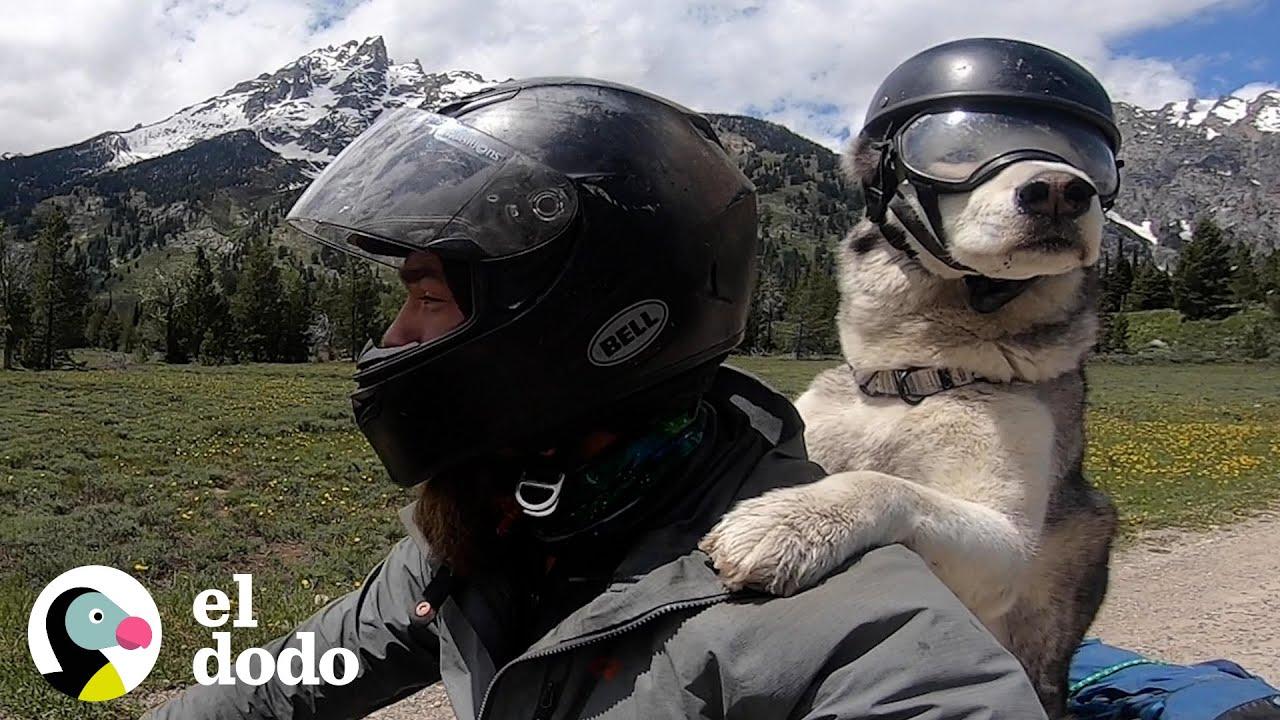 Hombre hace el acto más dulce cuando su perro mayor quiere ir en moto   El Dodo