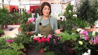 O Nosso Jardim: Flores de Sombra
