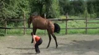 Дружба с лошадью.wmv