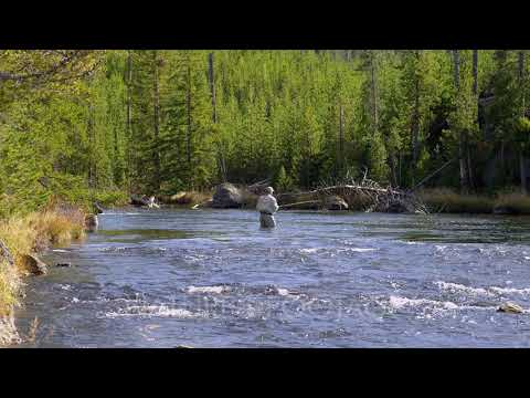 Fly Fishing In Firehole River, Yellowstone