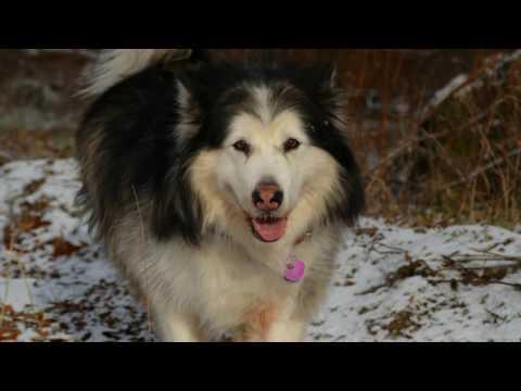 Keira's Hope Dog Rescue & Sanctuary Documentary