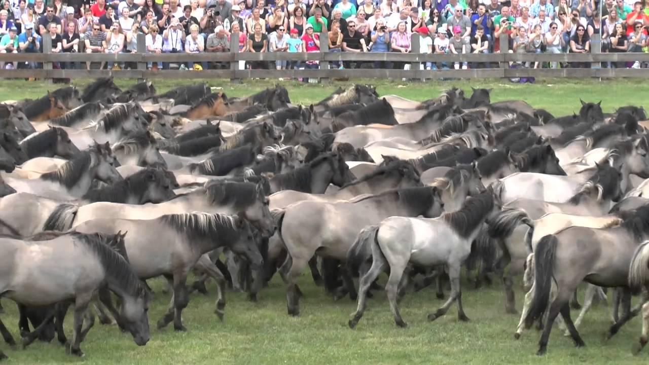 Rabid Horses In Germany! - 1280×720
