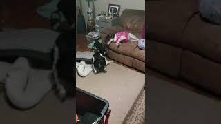 dog fight.mp4