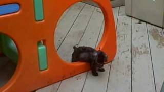 Puppies Play On Little Tikes Playset