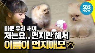 [미운 우리 새끼] 스페셜 '저는요.. 먼지만 해서 이름이 먼지애오' / 'My Little Old Boy' Special | SBS NOW