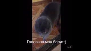 Кот говорит ГОЛОВА БОЛИТ:(