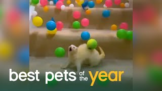Top 20 Exotic Pets | Best Pets Of The Year 2020