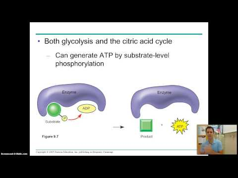 campbell ap bio chapter 9 part 1
