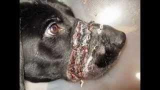 stop dog abuse Thumbnail