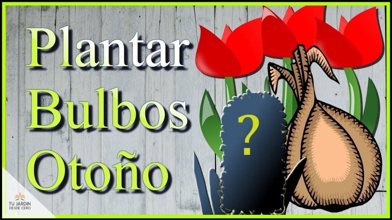 Plantando bulbos en oto o jacinto tulip n y narcisos - Bulbos de otono ...