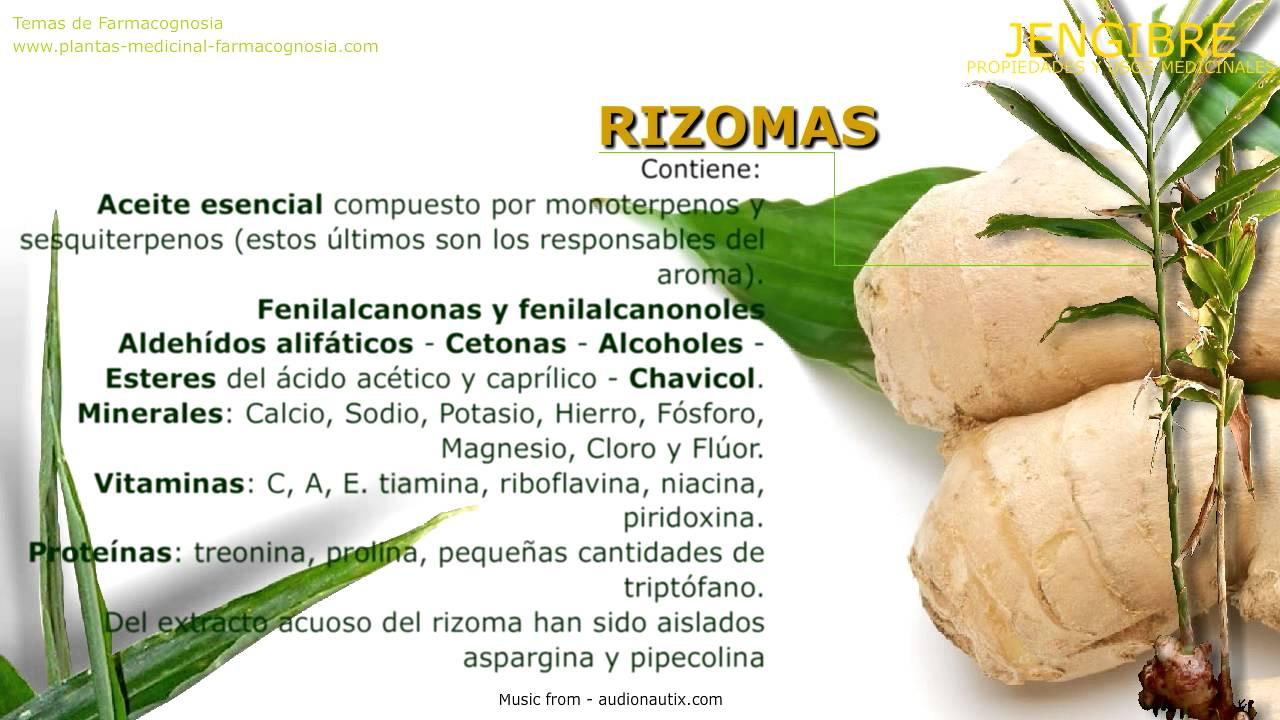 Jengibre propiedades medicinales de la planta beneficios for Planta decorativa con propiedades medicinales