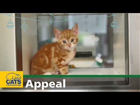 Cats Protection's Christmas Appeal 2019