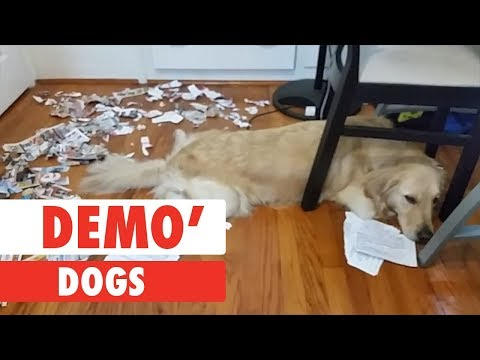 Demo Dogs