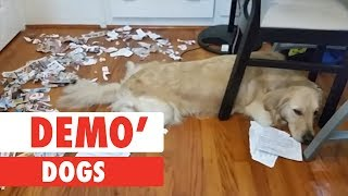 demo-dogs