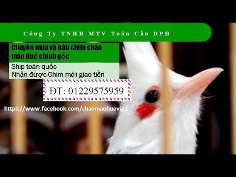 Chao Mao Hue Mao lan hau bo che khung 01229575959