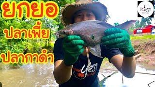 ยกยอกลางสายฝน Fishing lifestyle Ep.99