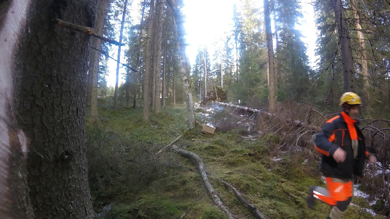 Puun Kaataminen