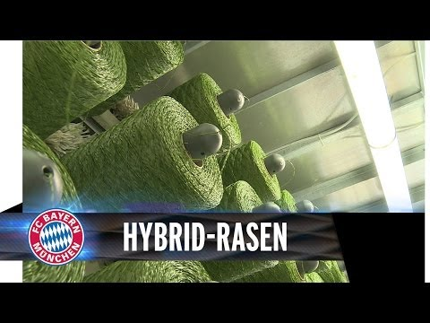 FC Bayern auf Hybrid-Rasen   Allianz Arena