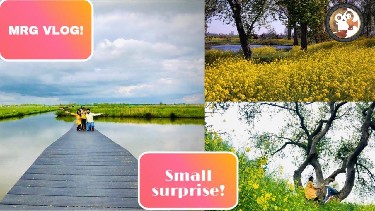 Yellow Flowers | tamil vlog netherlands | MRG | நெதர்லாந்து | Tamil Travel Vlog
