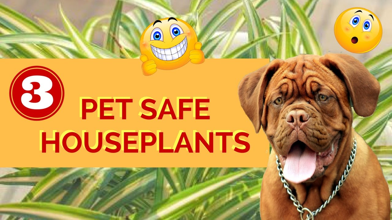 3 pet safe houseplants youtube for Dog safe houseplants