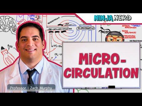 Cardiovascular | Microcirculation
