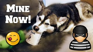 My Dog Steals Ice Cream | Try Not To Laugh
