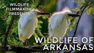 Wildlife Filmmaking-Wildlife of Arkansas