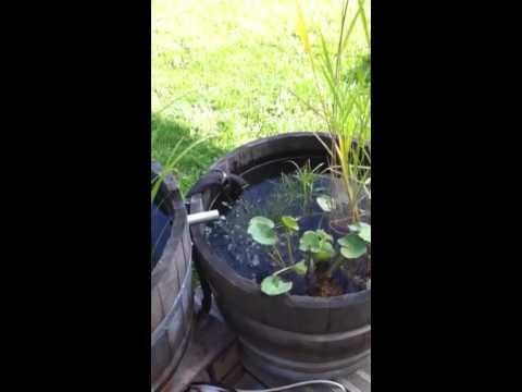 Mini bassin youtube - Mini bassin de jardin ...