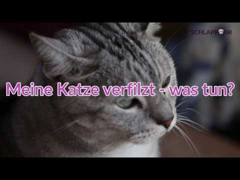 Tipps vom Tierarzt: Meine Katze haart - was tun?