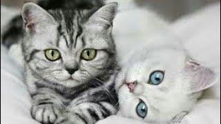 Какая порода кошки подходит тебе по знаку задиака