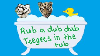 TeeGee Bubble Bath! | TIGER CUBS PLAYING IN BUBBLES